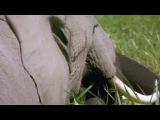 BBC Чудо животного мира 6 Слоны (2014) HD